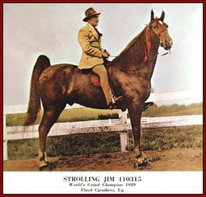 Strolling Jim, the first winner of the TN Walking Horse Celebration, 1939